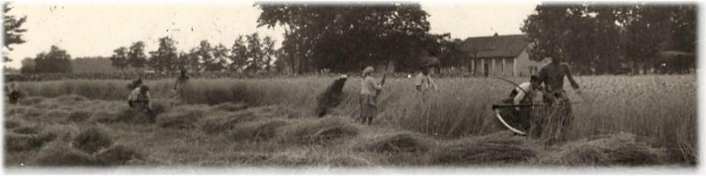 Aratás az 1920-as években